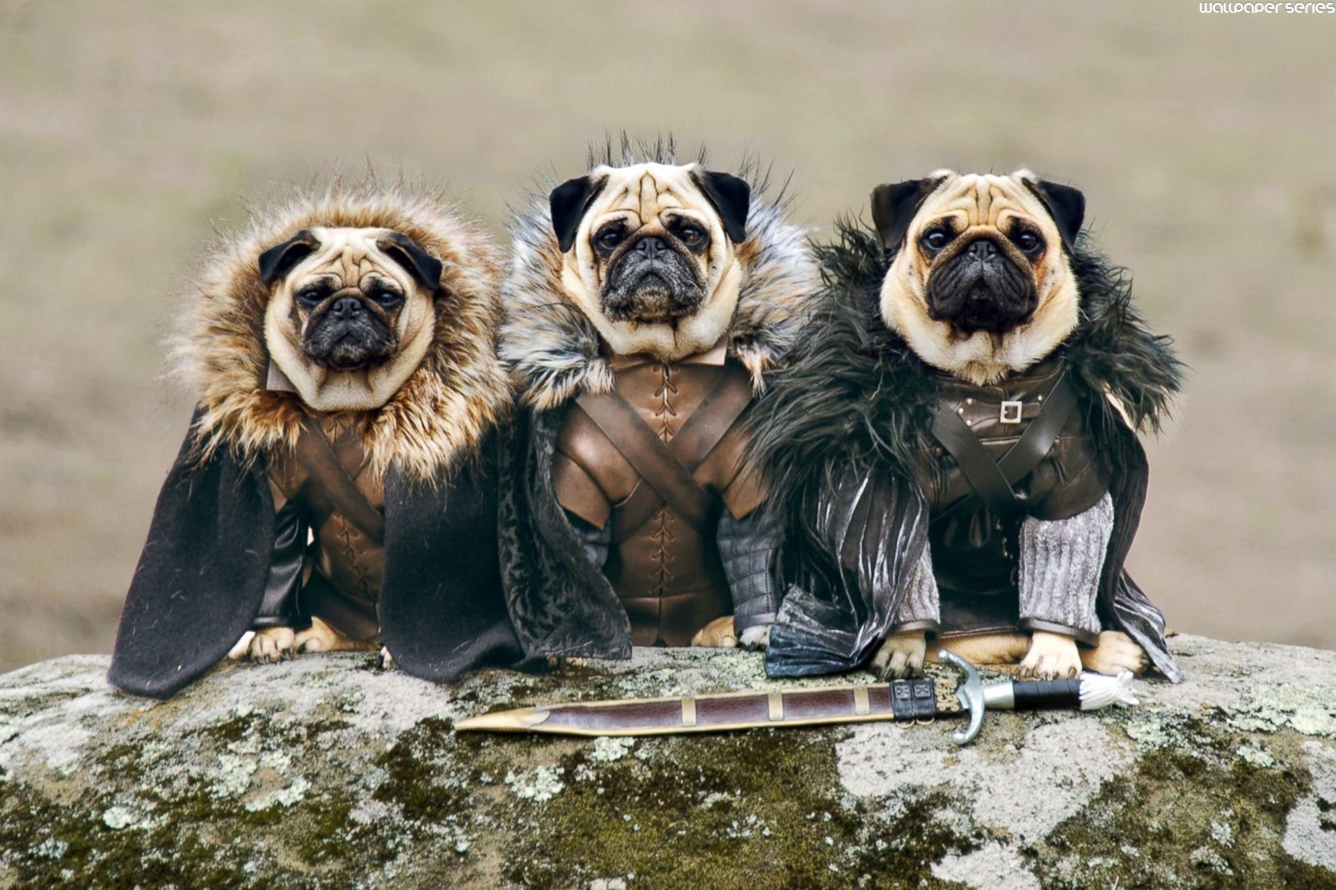 Pug Wallpapers High Resolution And Quality Download