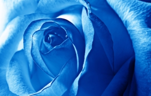 Blue Flower Widescreen