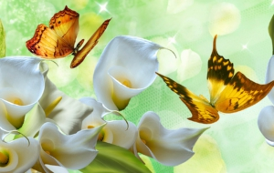 Calla Flower Pictures