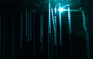 Glow Worm Cave Pictures