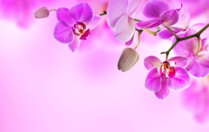 Orchid 4K