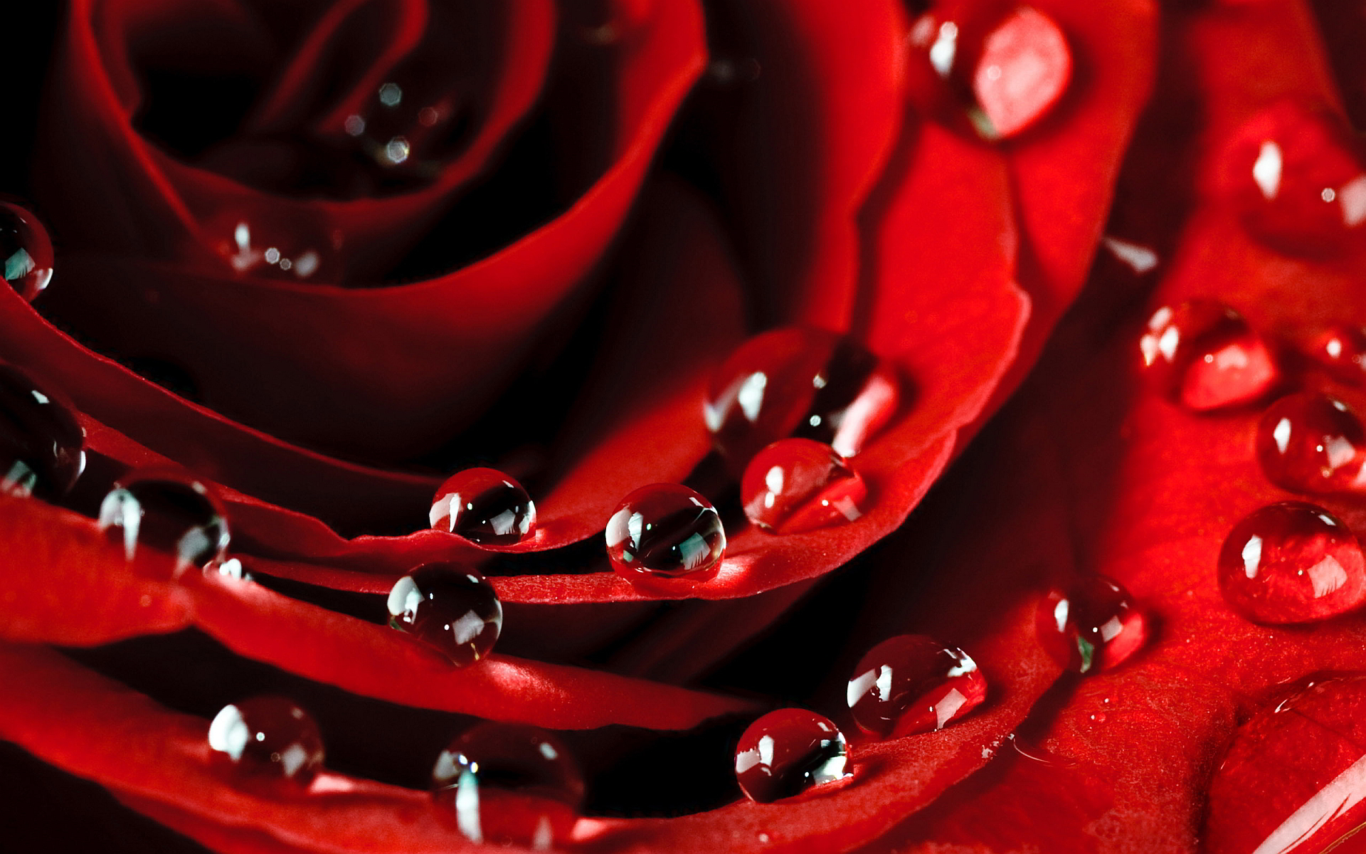 Flowers &amp; Rose <b>Petals Wallpapers</b> HD Pictures – One HD <b>Wallpaper</b> ...