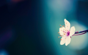 Spring Flowers HD Background