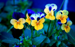 Spring Flowers High Quality Wallpapers