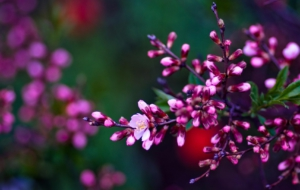 Spring Flowers Wallpapers