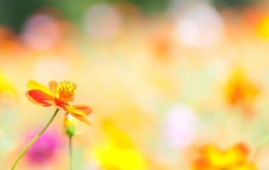 Summer Flower High Quality Wallpapers