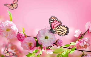 Butterfly Widescreen