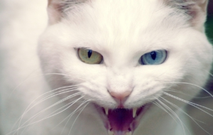 Cat High Definition