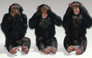 Chimpanzee High Definition Wallpapers