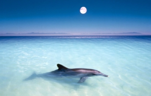 Dolphin High Definition Wallpapers