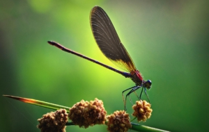 Dragonfly Images