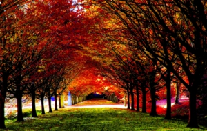 Fall High Definition Wallpapers