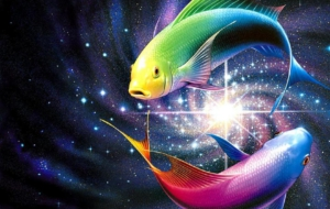 Fish High Definition Wallpapers
