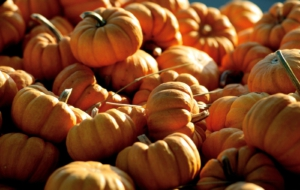 High Definition Halloween Images 15