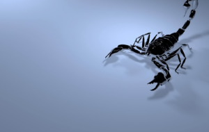 Scorpion Full HD