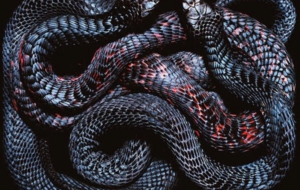 Snake High Definition Wallpapers