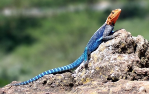 Agama High Definition Wallpapers