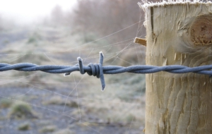 Barb Wire Pictures