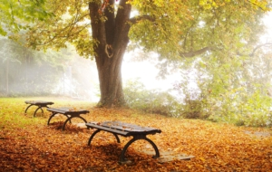 Bench High Quality Wallpapers