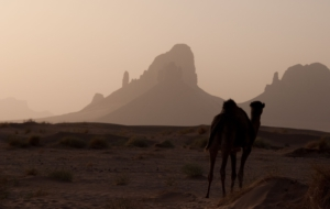 Camel Free HD Wallpapers