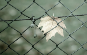 Fence Free HD Wallpapers