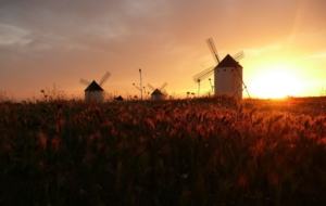 Pictures Of Windmill
