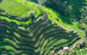 Rice Terrace HD