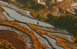 Rice Terrace High Definition Wallpapers