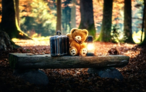 Stuffed Animal Free HD Wallpapers