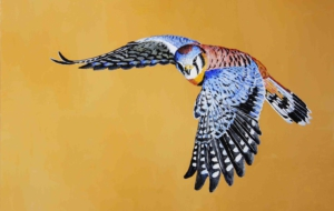 American Kestrel High Quality Wallpapers
