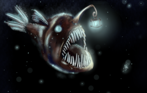 Anglerfish Pictures