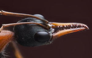 Ant Download Free Backgrounds HD