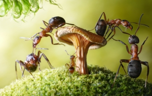Ant Free HD Wallpapers
