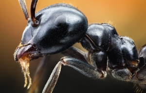 Ant Wallpapers And Backgrounds