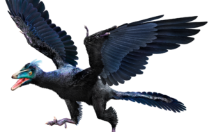 Archaeopteryx Images