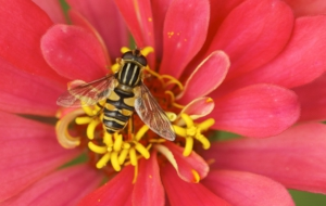 Bee Download Free Backgrounds HD