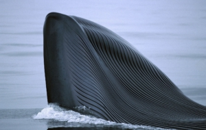 Blue Whale Background