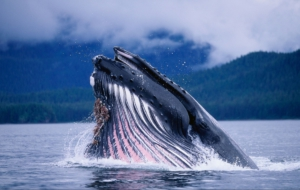 Blue Whale High Quality Wallpapers