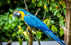 Blue And Yellow Macaw Desktop