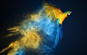 Blue And Yellow Macaw Desktop Images