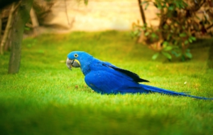 Blue And Yellow Macaw Free HD Wallpapers
