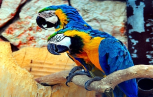 Blue And Yellow Macaw HD Wallpaper