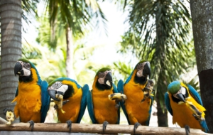 Blue And Yellow Macaw Full HD