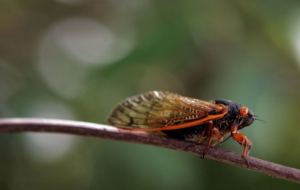 Cicada Download Free Backgrounds HD