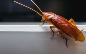 Cockroach For Desktop