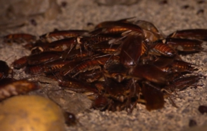 Cockroach Free Images