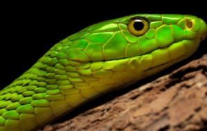 Eastern Green Mamba Computer Backgrounds