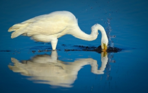 Egret High Definition Wallpapers
