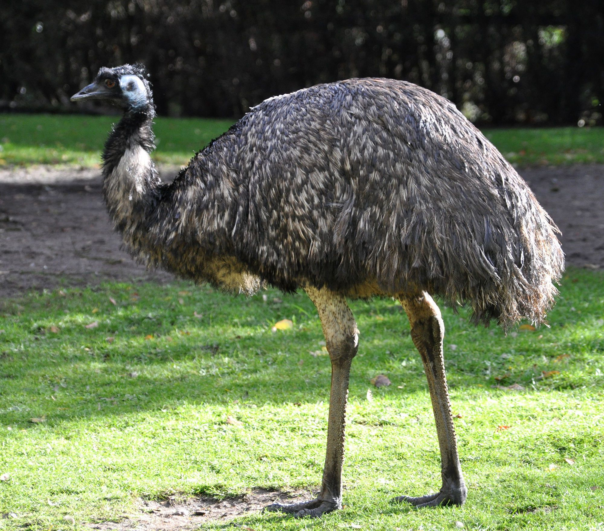 Emu Phone, Desktop Wallpapers, Pictures, Photos, Bckground