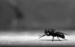 Flying Insects Download Free Backgrounds HD